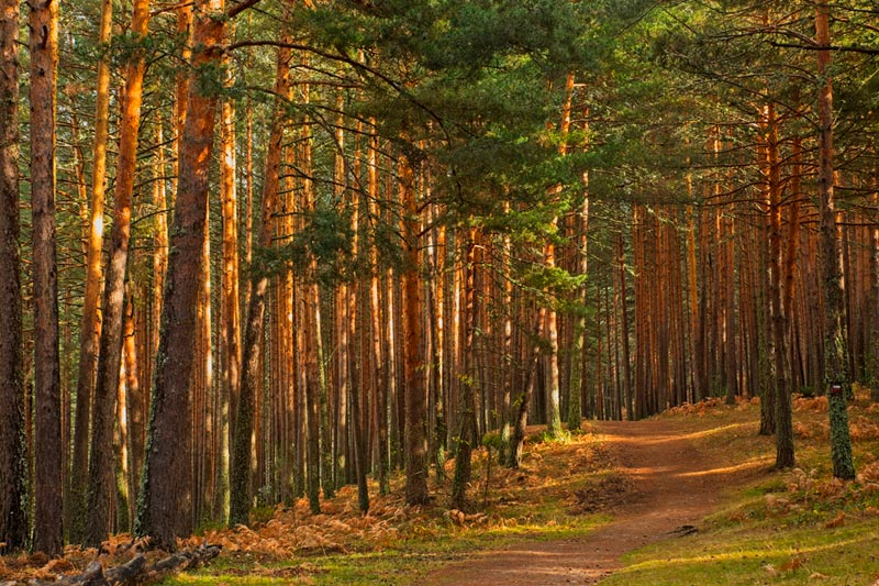 Madrid most beautiful forests to get lost in