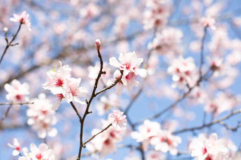 Planes para disfrutar de la primavera en Madrid